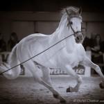 Spanish Horse , Salon du Cheval Paris 2010