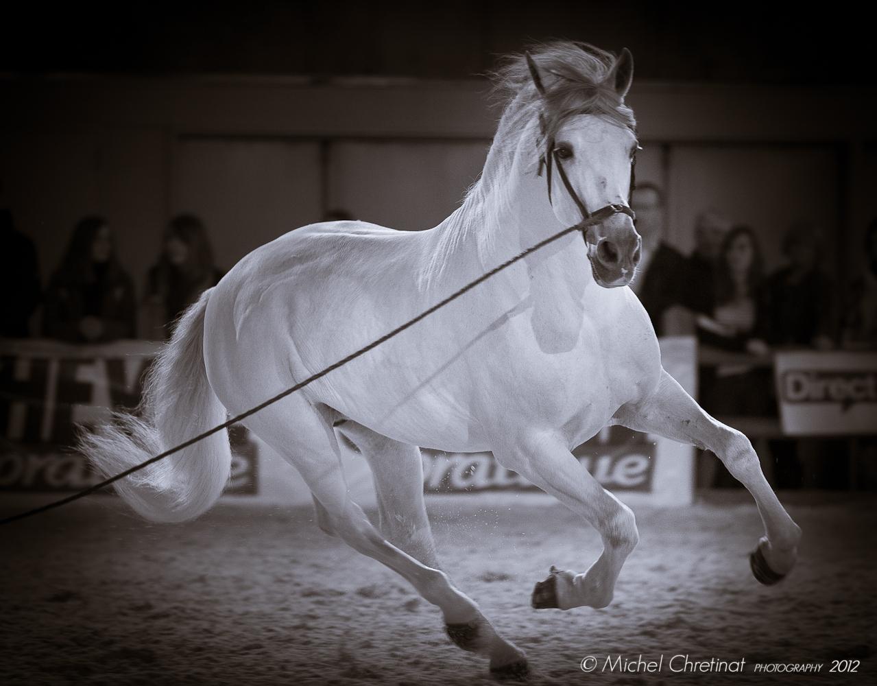 Portfolio of horses pictures michel chretinat photography for Salon du cheval paris 2018