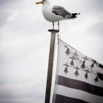 Gwenn ha du : Flag of Brittany